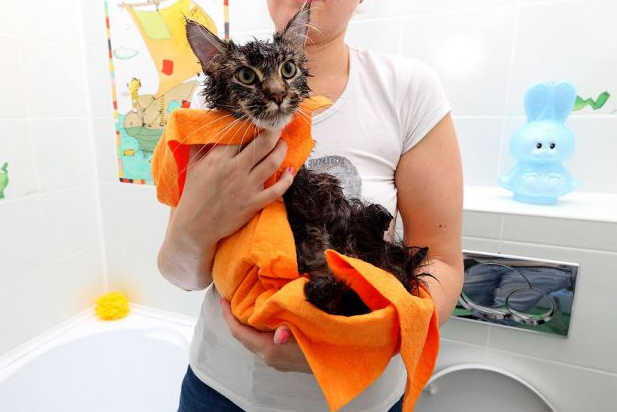 Как правильно купать кошку?