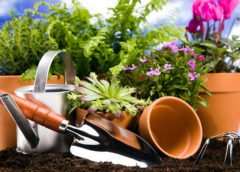 Домашние удобрения для комнатных и садовых растений